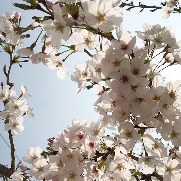 春 (東京)