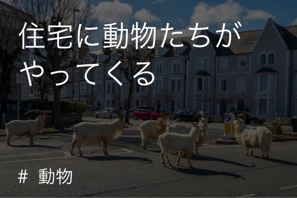 住宅 動物(covid-19/コロナウイルス)